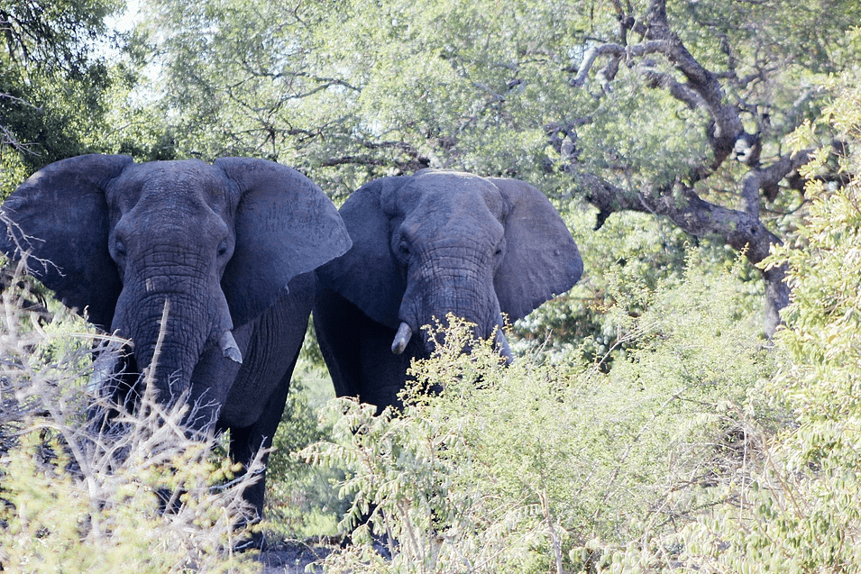 BOTSWANA AND NAMIBIA CIRCULAR SAFARI