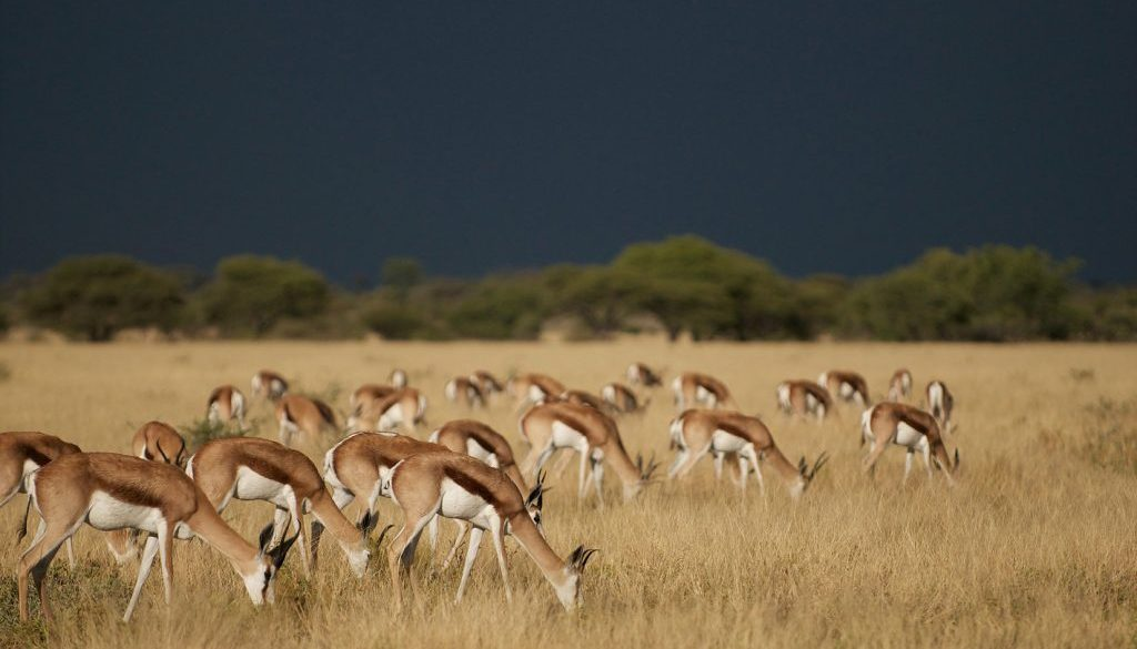 Botswana migration