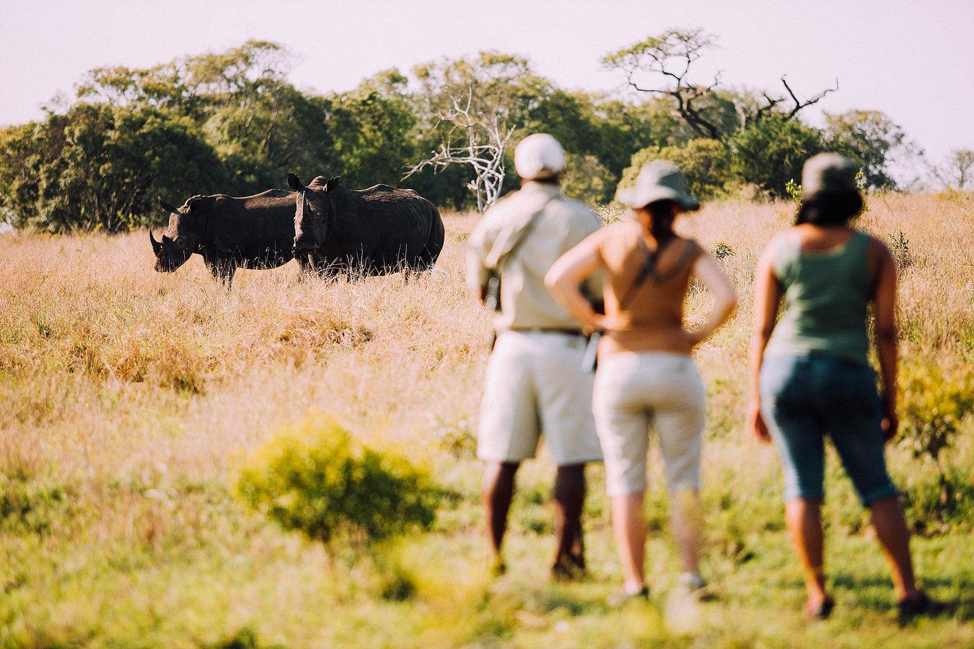 Rhino in Phinda Private Game Reserve