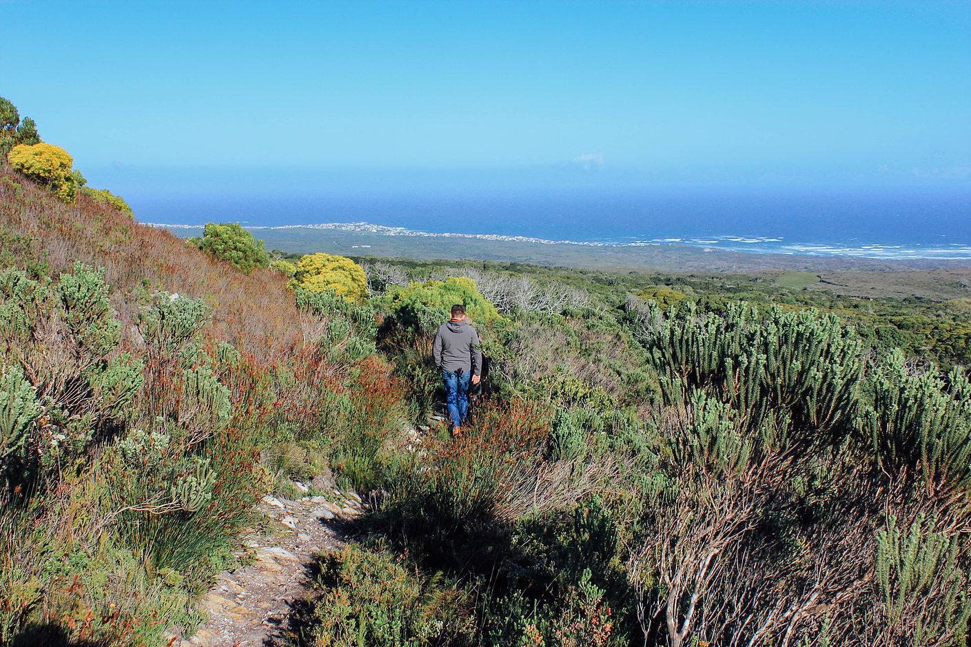 Grootbos forest lodge10