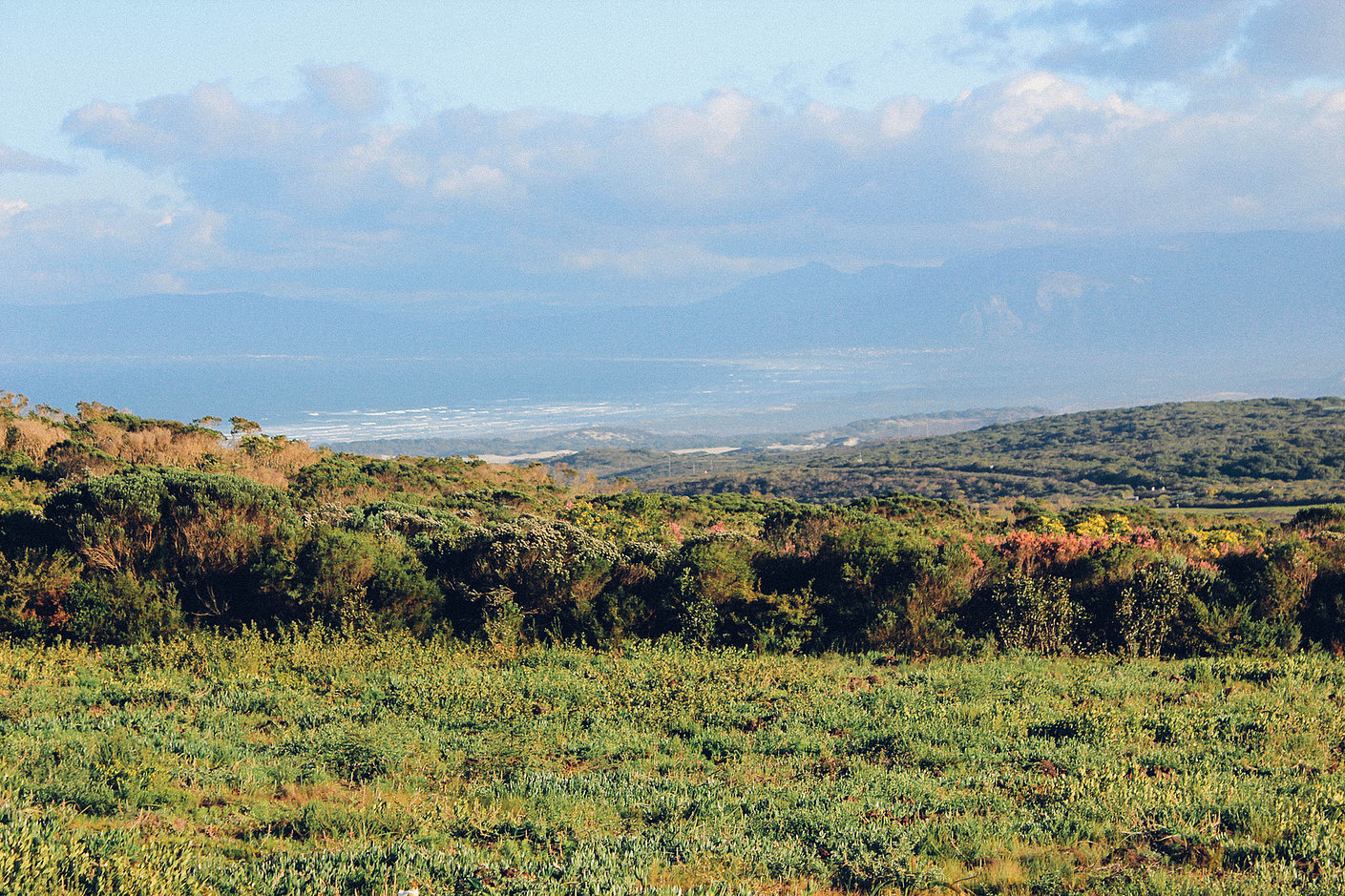 Grootbos forest lodge7