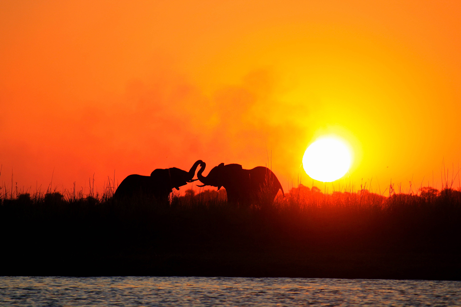 Elephants sunset