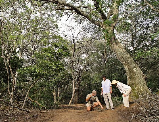 Phinda_Forest_walking6.jpg