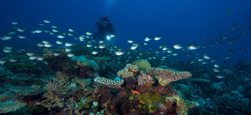 Diving - Sambi sambi 5 (Credit to Lars Witberg)