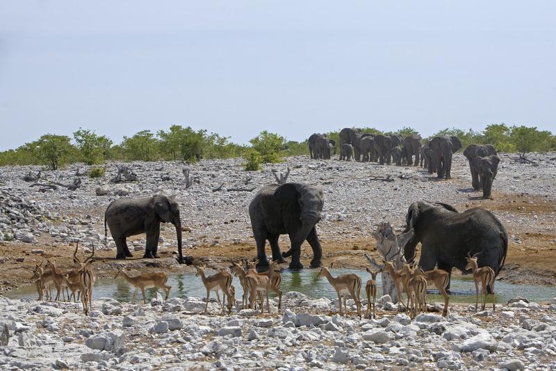 Made in Africa Tours - Namibia Exploration - Etosha Elephants
