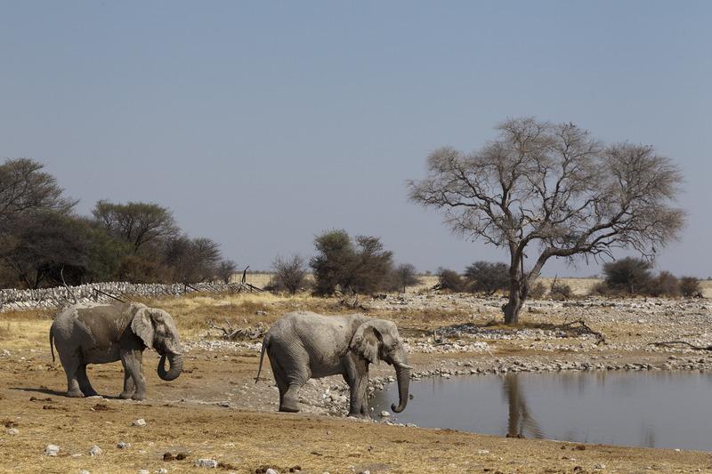 Made in Africa Tours - Namibia Exploration - Etosha Waterhole