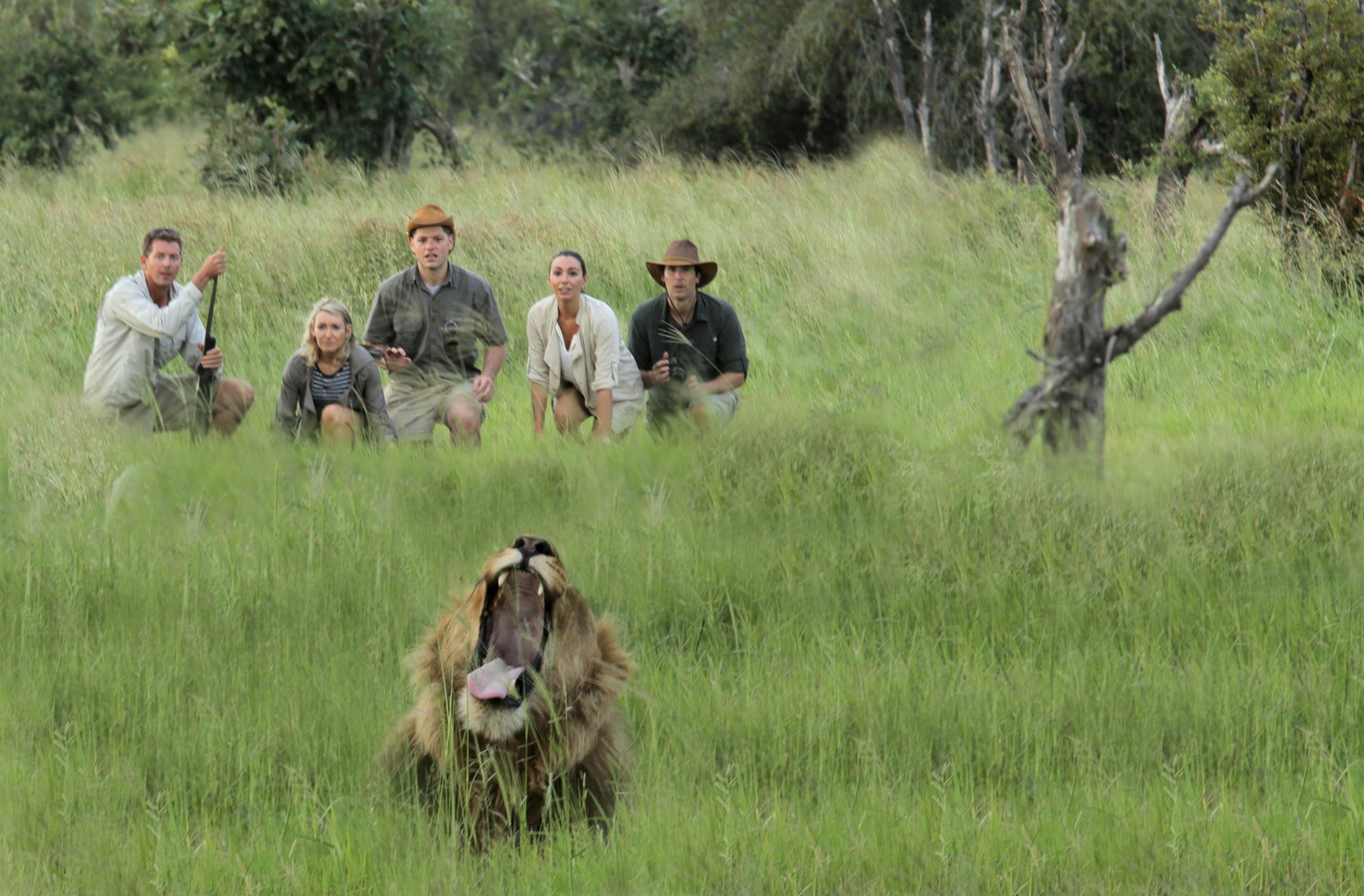 Botswana lion safari