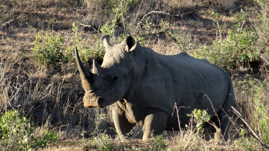 Made in Africa Tours & Safaris - Garden Route Self Drive - White Rhino