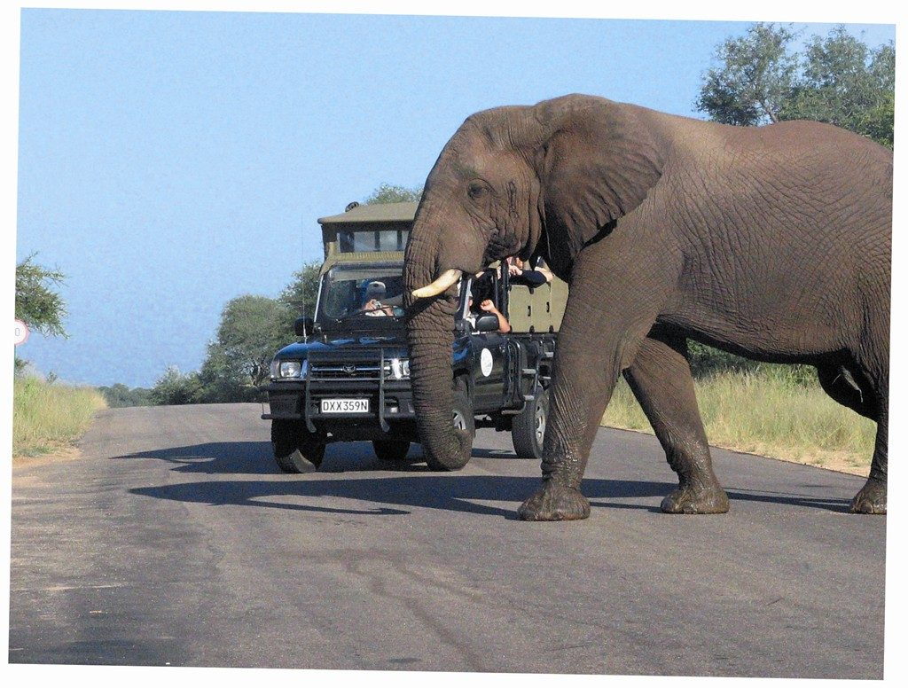 Made in Africa Tours & Safaris - Highlights of South Africa (1)