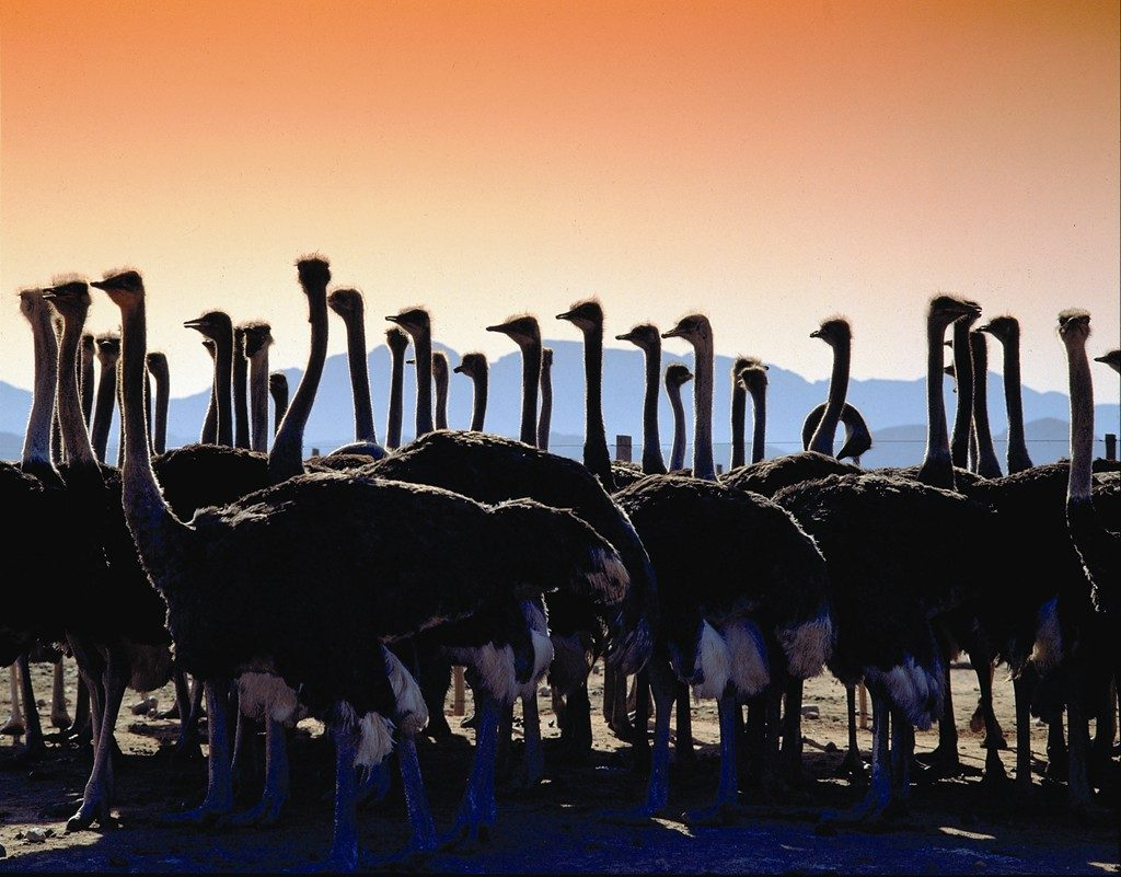 Made in Africa Tours & Safaris - Highlights of South Africa (5)