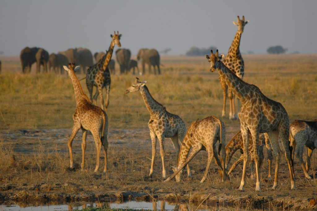 Made in Africa Tours & Safaris - Namibia & Botswana Classic Safari - Chobe River