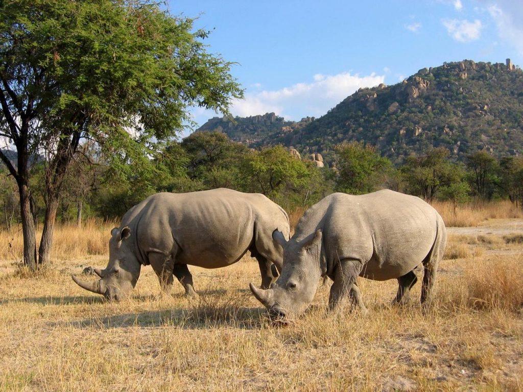 camp amalinda rhino