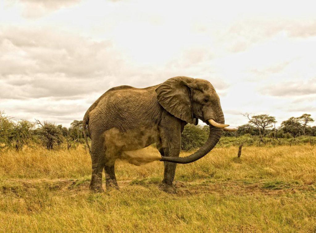 elephant_at_somalisa1
