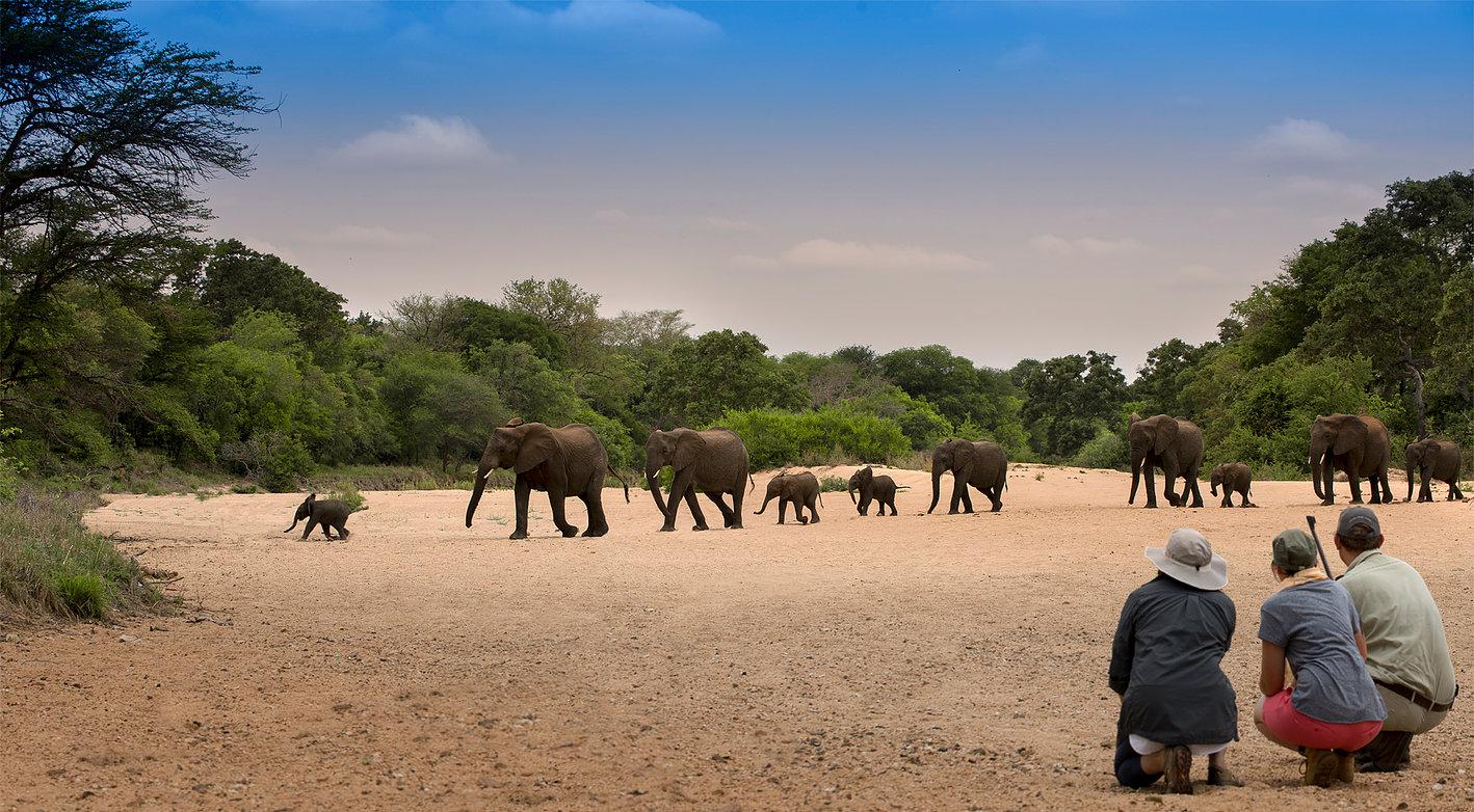 bucket-list African adventures, big five kruger safari