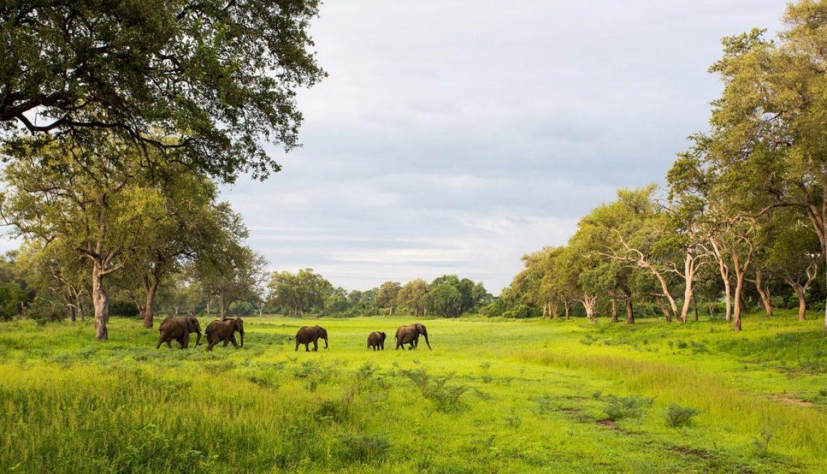 south luangwa safari6 zambia