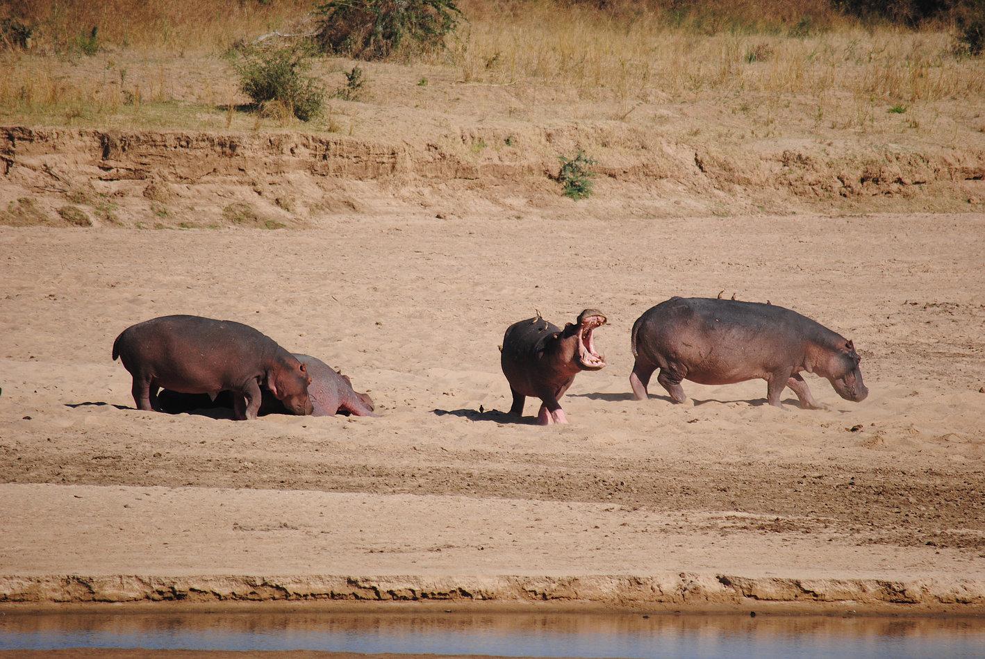 bucket-list African adventures, walking safari