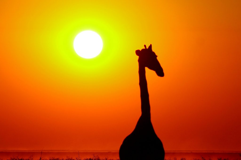 sunway_namibia_giraffe_sunset_ruan_mey-_20171003_1475206107