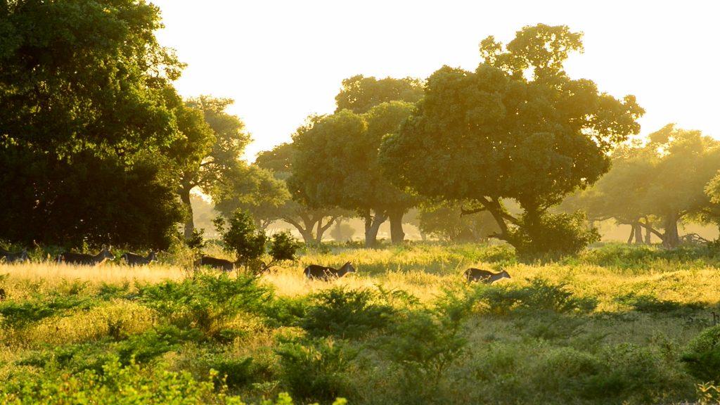 zambezi_expeditions_281