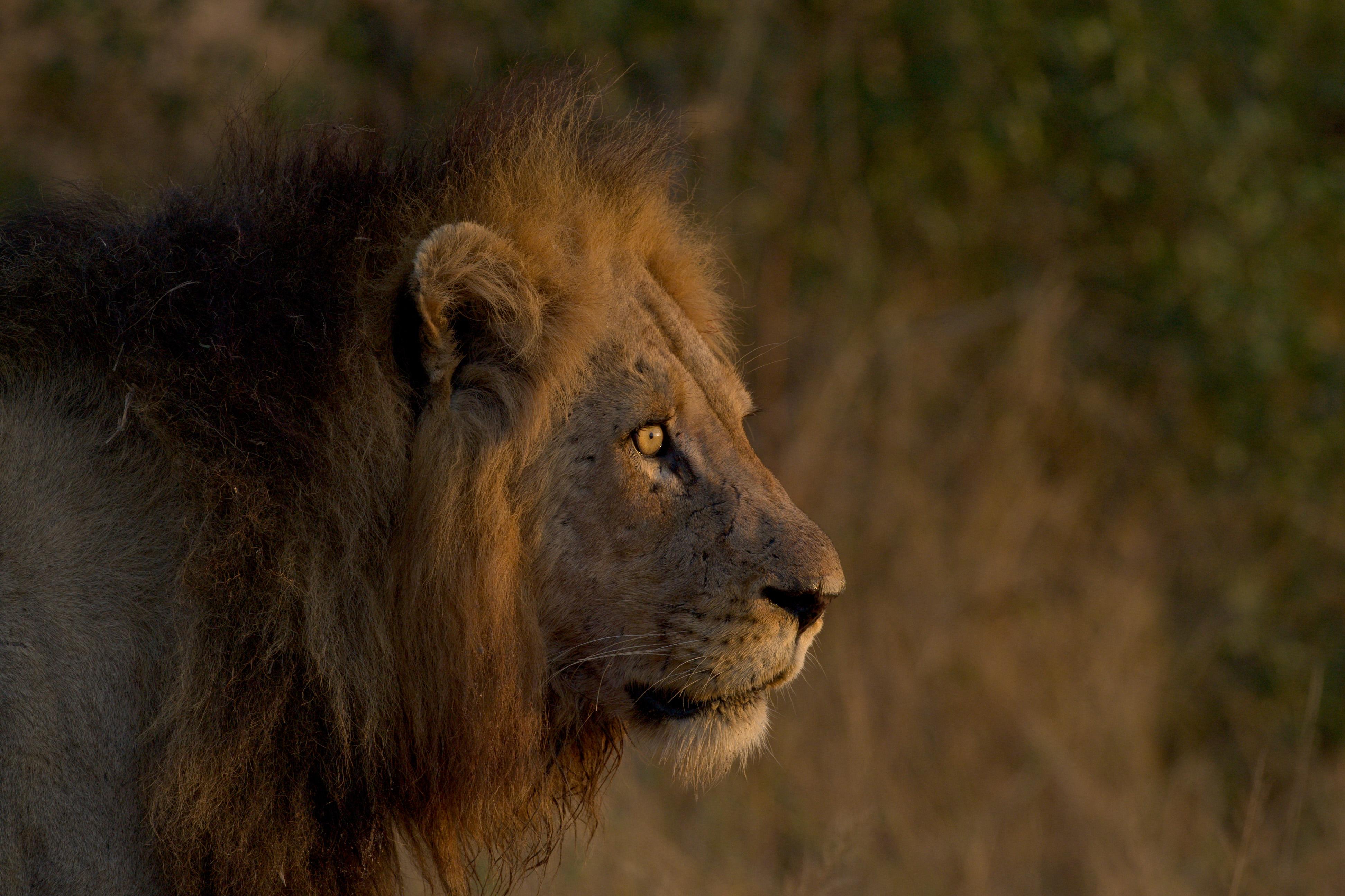 Kruger & Cape Town Safari