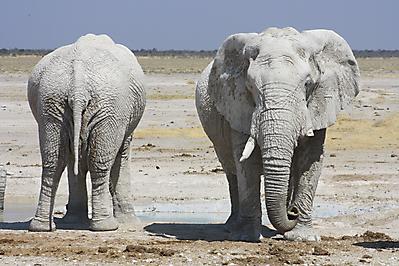 NAMIBIA & BOTSWANA CIRCULAR SAFARI
