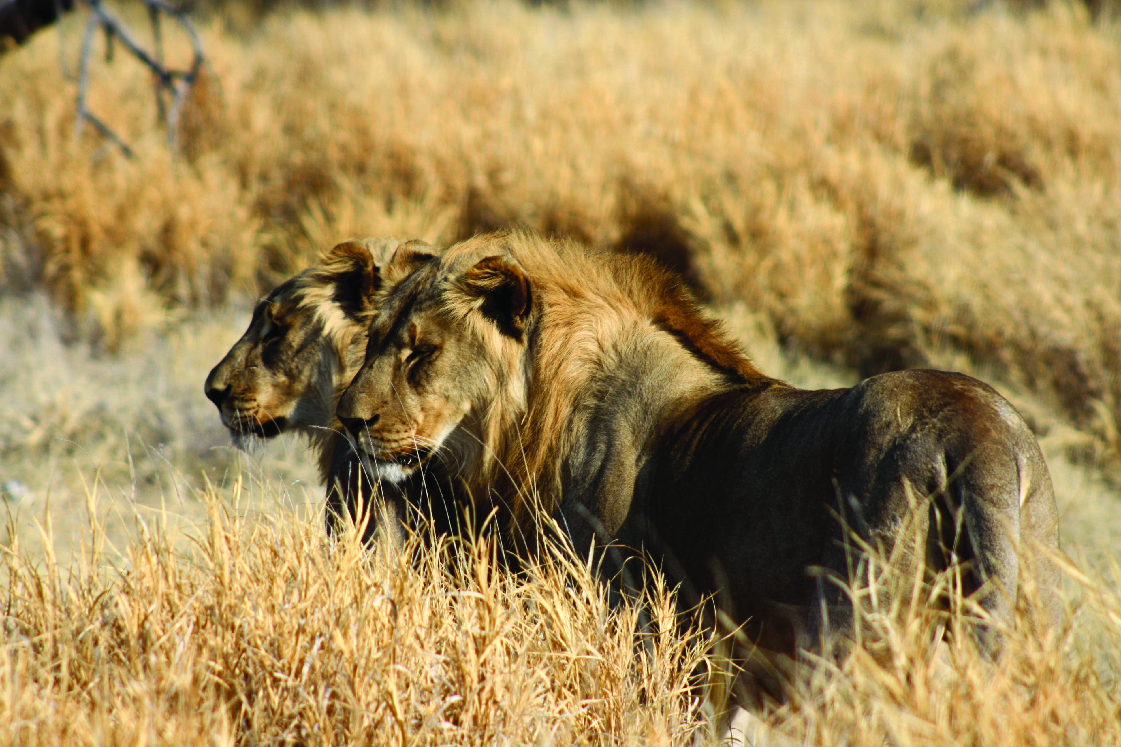 NAMIBIA & BOTSWANA CLASSIC SAFARI