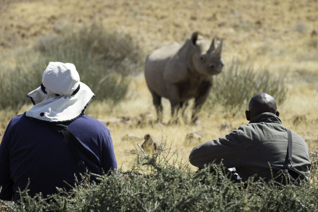 Black Rhino Tracking - Namibia Desert Safari