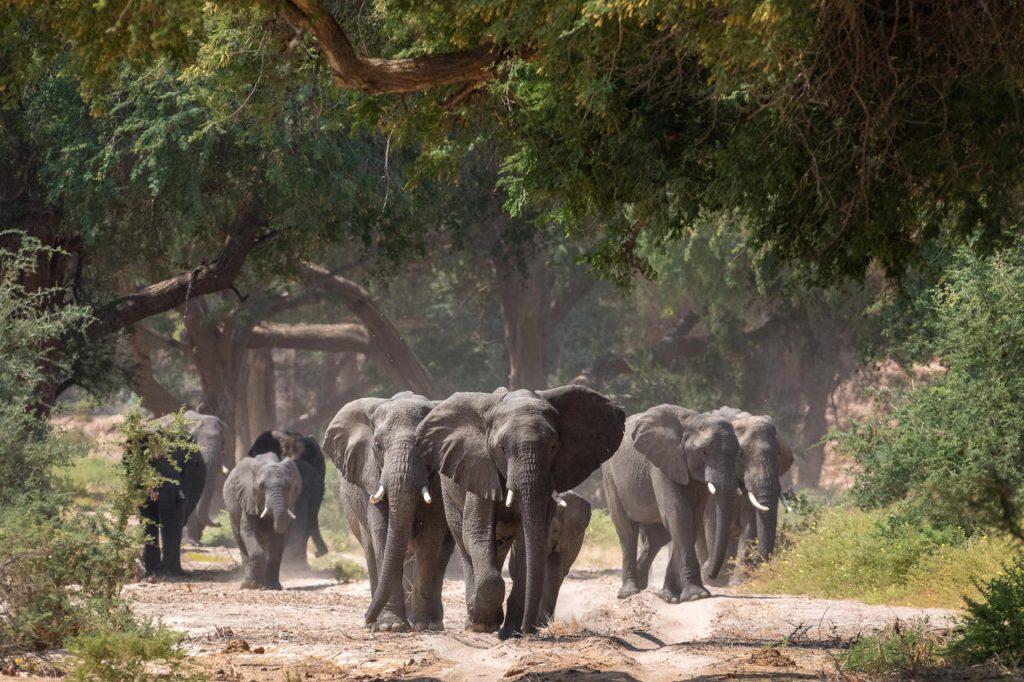 Damaraland Desert Elephants - Namibia Exploration
