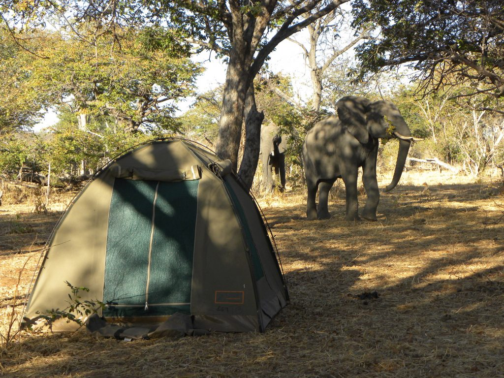 Okavango Delta Wild Camping - Cape to Vic Falls Adventure Safari