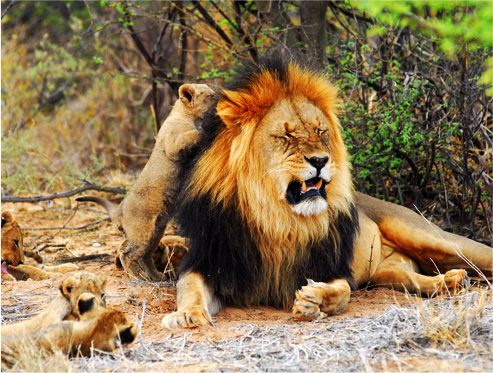 Tswalu Kalahari Safari