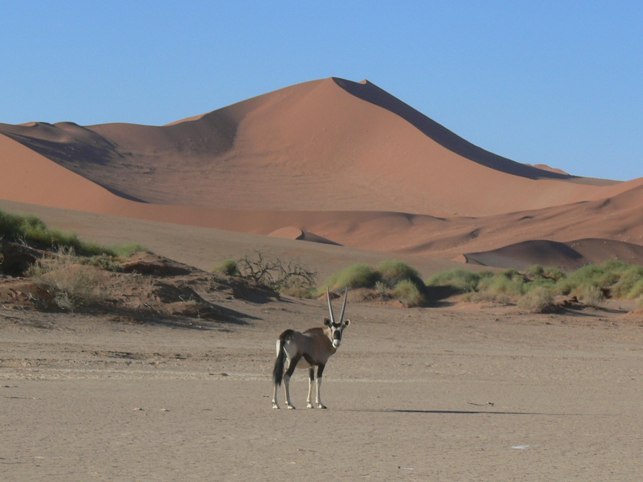 NAMIBIA LUXURY CAMPING SAFARI