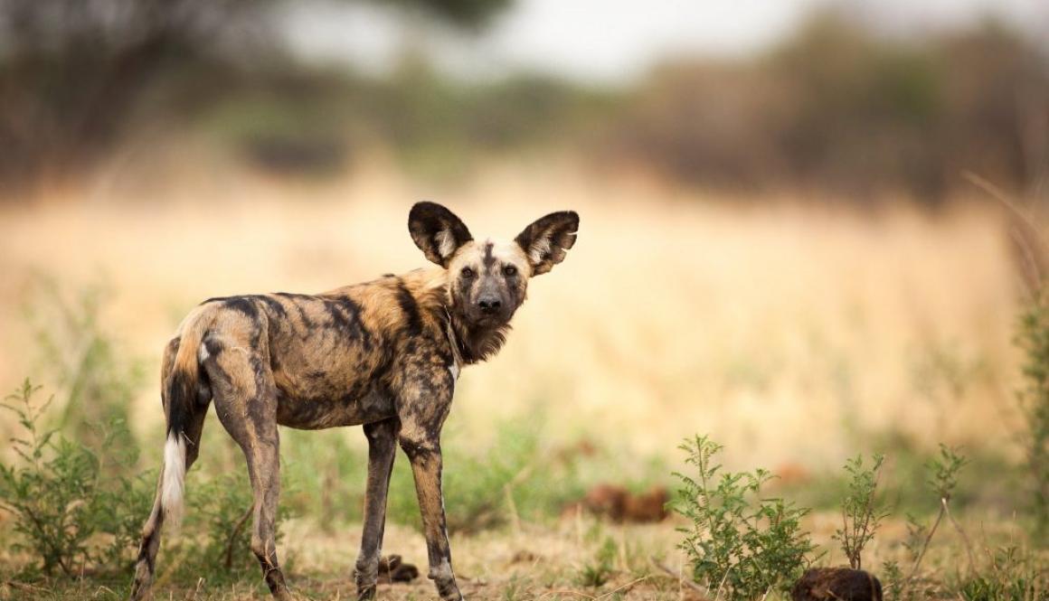 Botswana Chobe Photography Safari