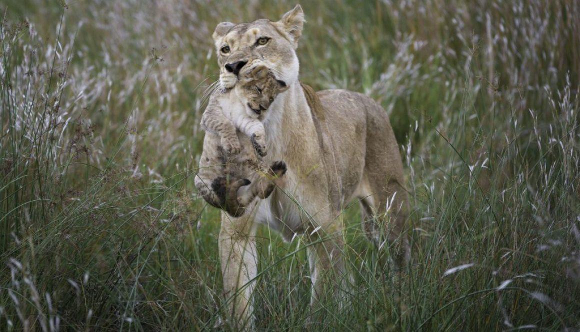 Big five safaris