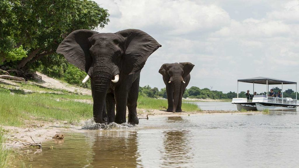 Botswana-Private-Reserve-Lodge-Safari---Chobe-Elephants - Copy