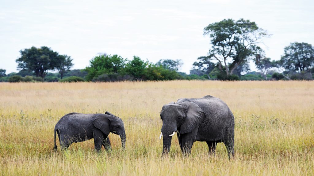 Botswana-Private-Reserve-Lodge-Safari---Khwai-Private-Reserve-Elephant - Copy