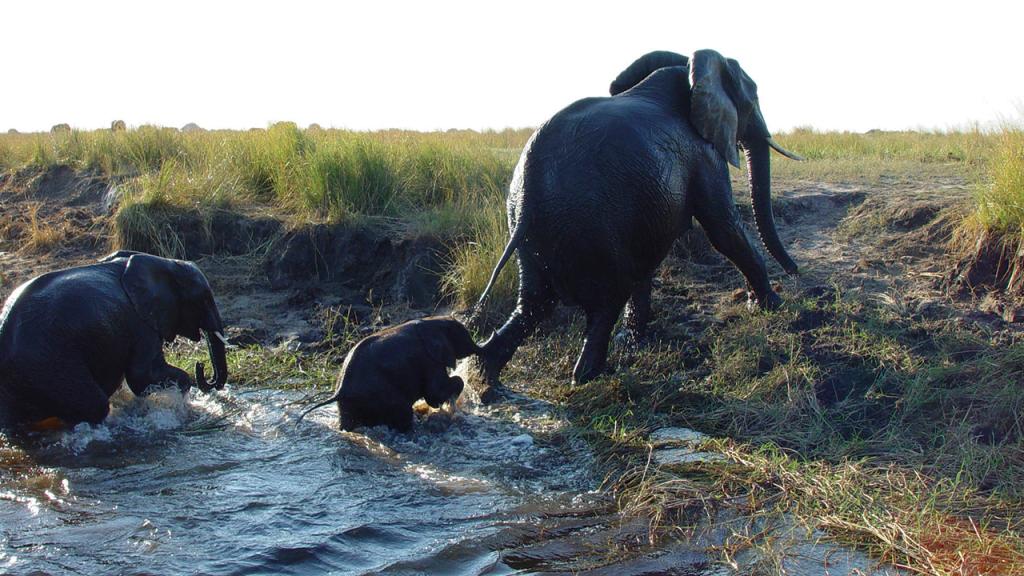 Botswana-Roundabout---Chobe-River-elephant-crossing