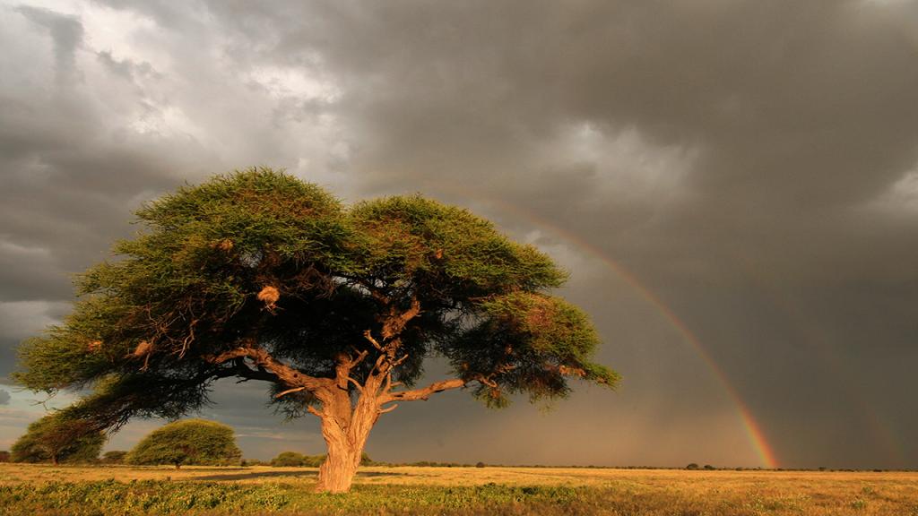 Botswana-Roundabout---Kalahari-Acacia-Tree