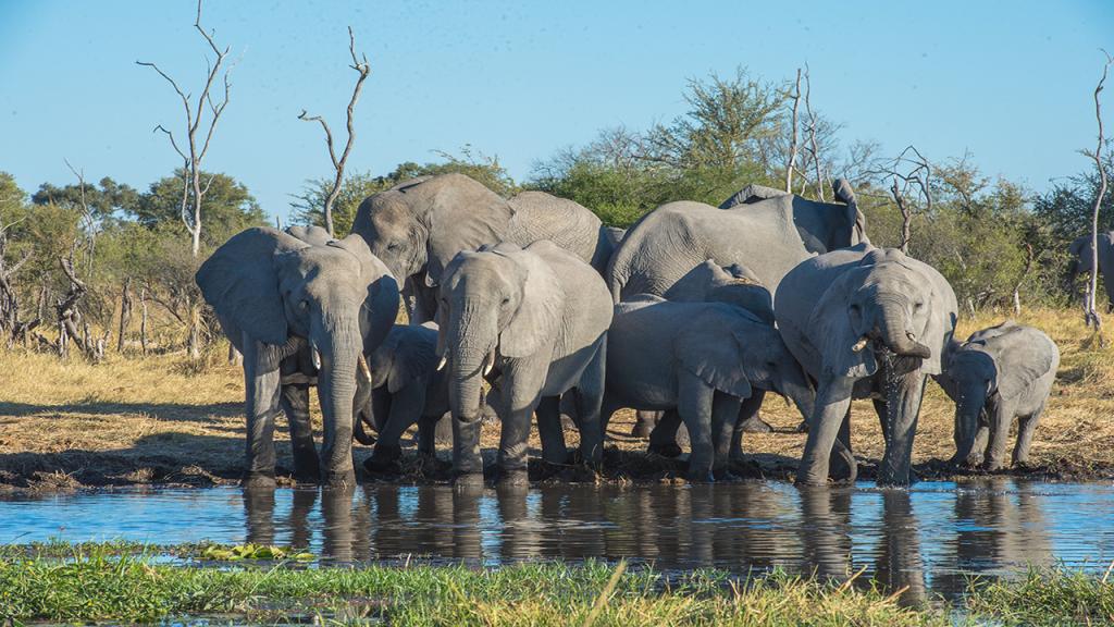 Classic-Botswama-Mobile-Safari---Moremi-Elephants