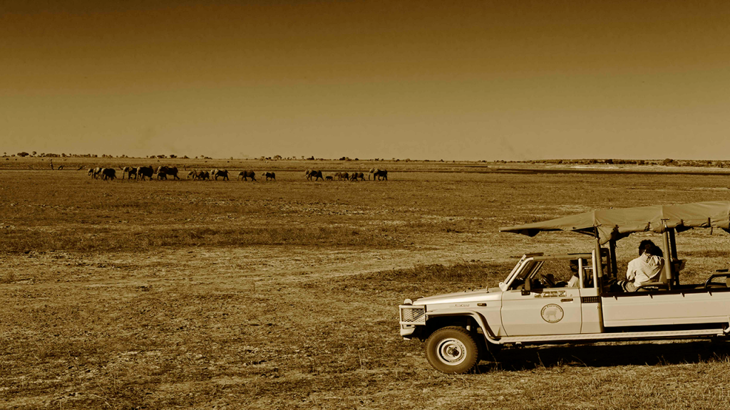 Botswana-Honeymoon-Safari---Elephants-on-Chobe-Game-Drive