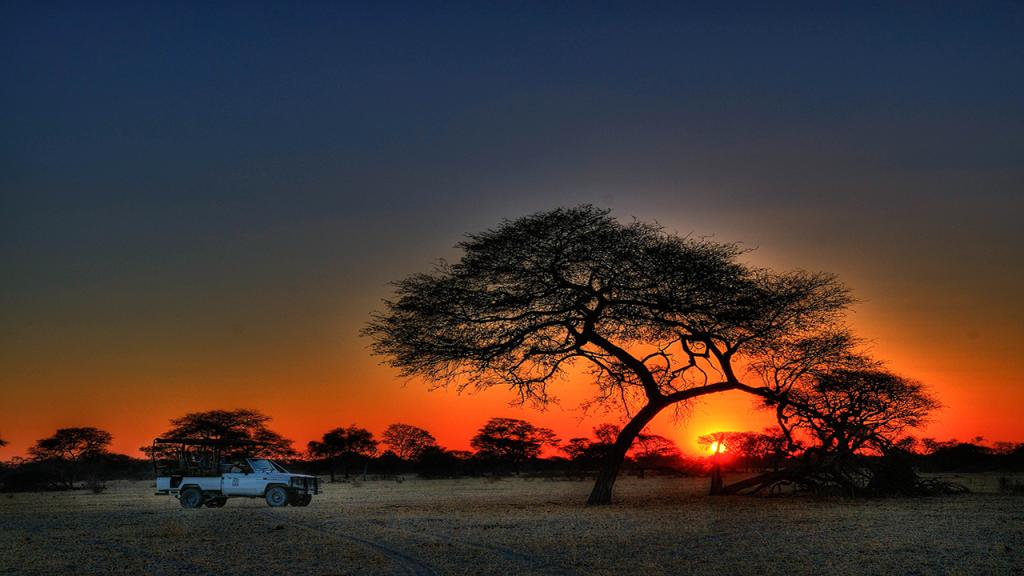 Kalahari-Luxury-Camping-Safari---Central-Kalahari-Game-Reserve-Acacia-Tree-at-sunset