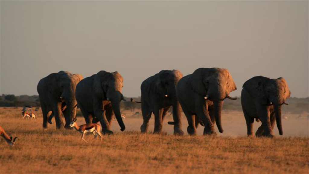 Kalahari-Luxury-Camping-Safari---Desert-Elephants