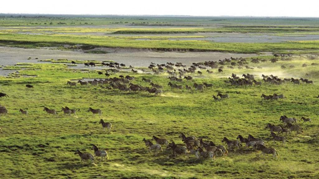 Kalahari-Luxury-Camping-Safari---Makgadikgadi-Pans-Zebra-Migration