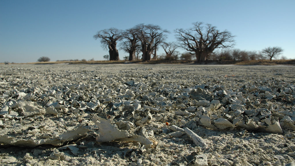 Kalahari-Luxury-Camping-Safari---Nxai-Pan-Baobabs