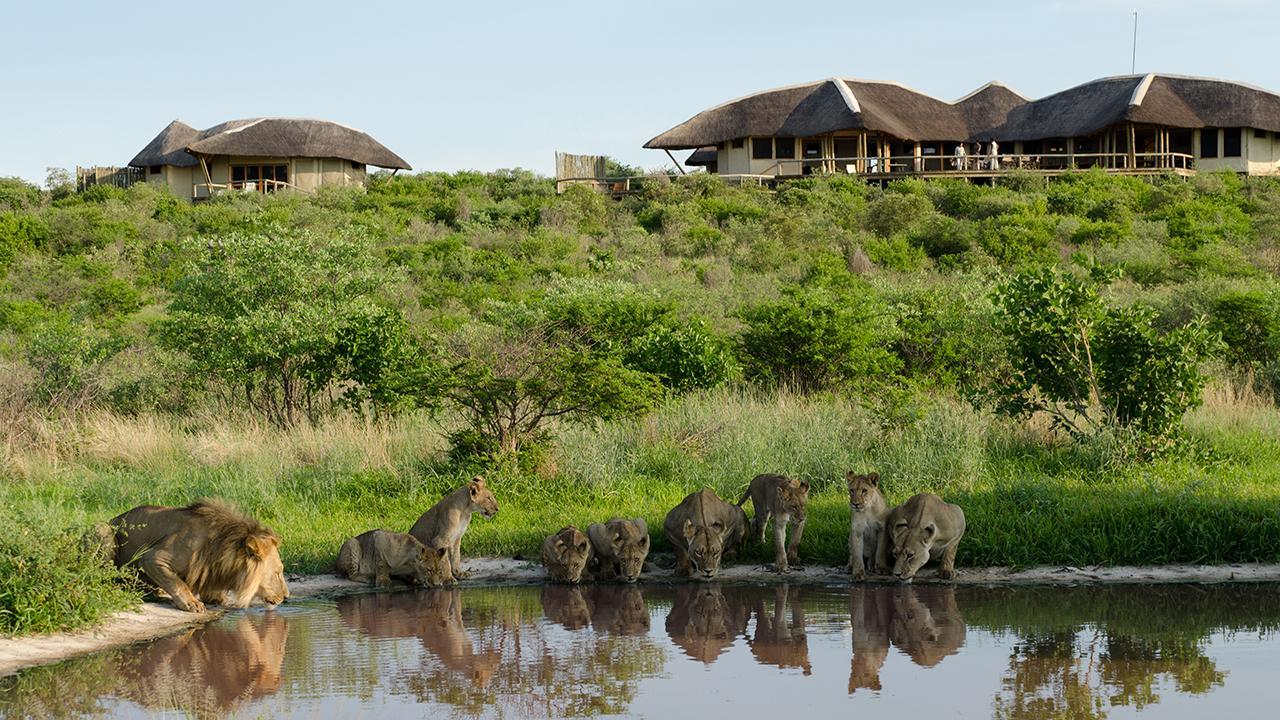Kalahari-Lions-at-Tau-Pan-Camp---Made-in-Africa-privately-hosted-Botswana-Safari