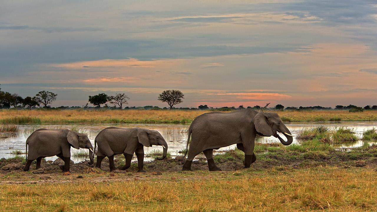 Kwando-Concession-Elephant-Herd