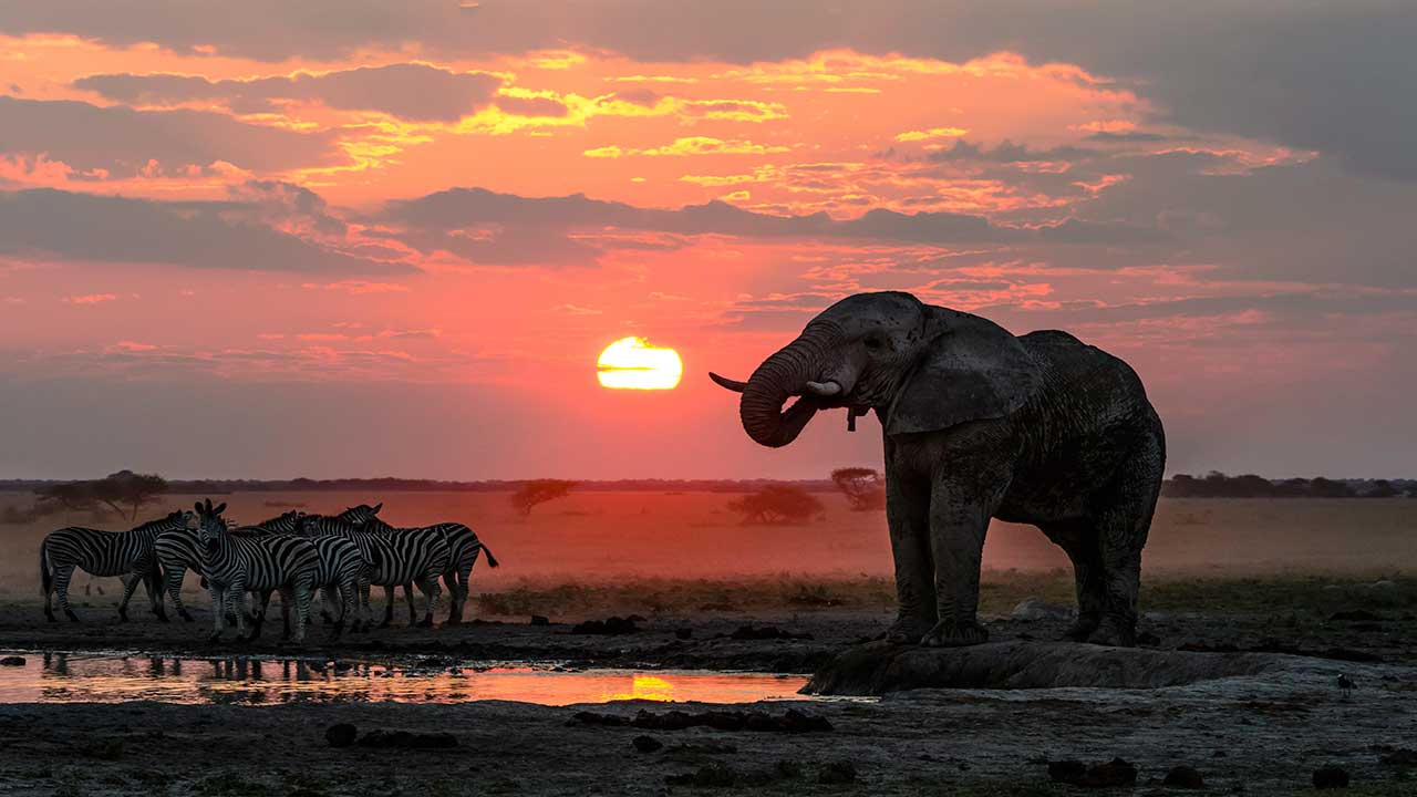 Nxai-Pan-Camp-Elephant-Bull-sunset